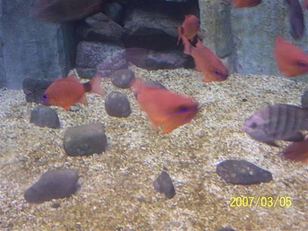 拍攝於澎湖水族館_005.jpg