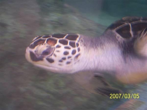 拍攝於澎湖水族館_003.jpg
