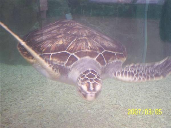 拍攝於澎湖水族館_004.jpg