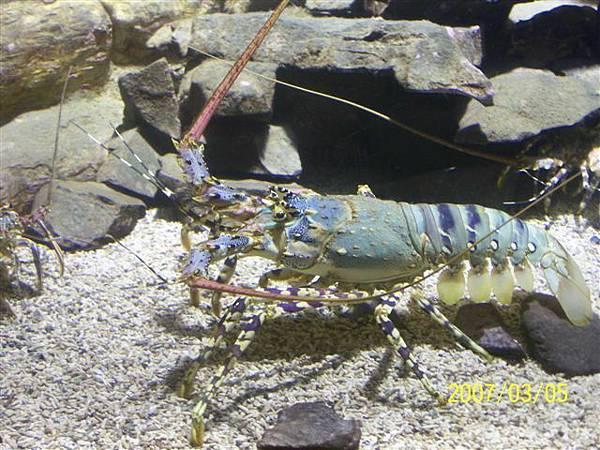拍攝於澎湖竹灣螃蟹博物館_019.jpg