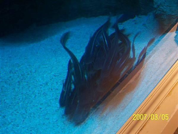 拍攝於澎湖水族館_008.jpg