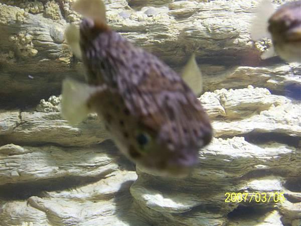 拍攝於澎湖水族館_006.jpg