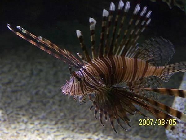 拍攝於澎湖水族館_014.jpg