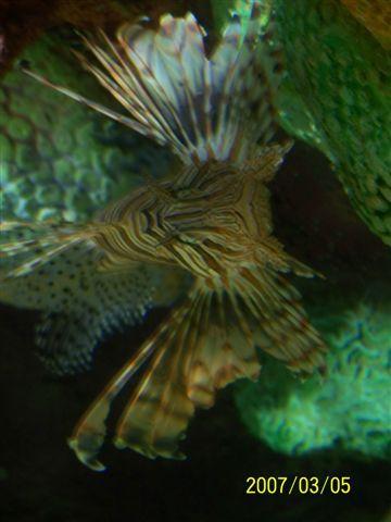 拍攝於澎湖水族館_015.jpg