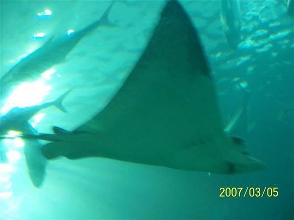 拍攝於澎湖水族館_020.jpg