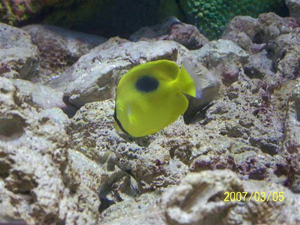拍攝於澎湖水族館_017.jpg
