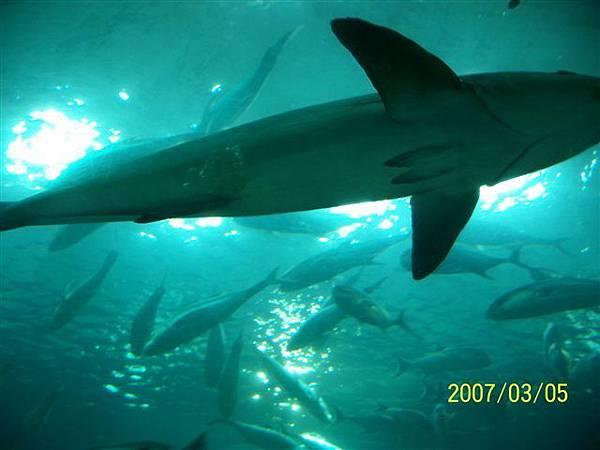 拍攝於澎湖水族館_018.jpg