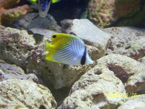 拍攝於澎湖水族館_016.jpg