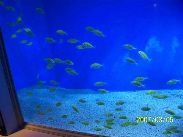 拍攝於澎湖水族館_021.jpg