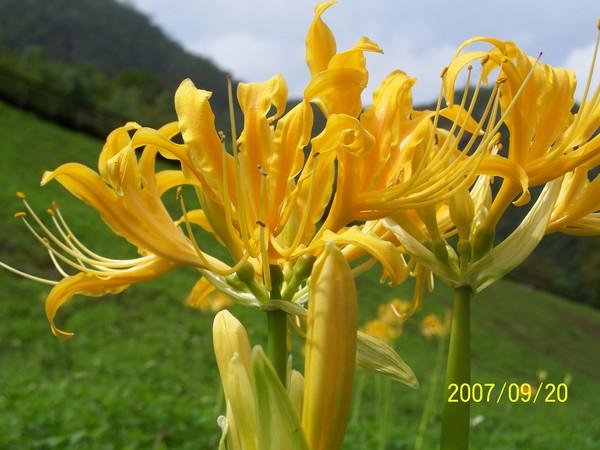 2007/9/20拍攝於太魯閣布落灣_001.jpg