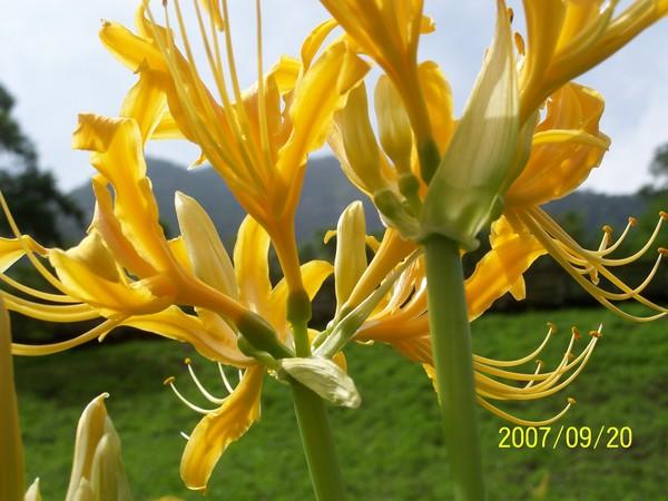 2007/9/20拍攝於太魯閣布落灣_002.jpg