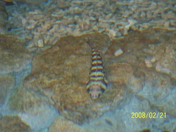 2008221拍攝於澎湖水族館_000.jpg
