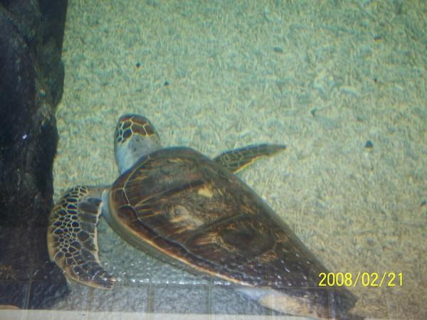2008221拍攝於澎湖水族館_002.jpg
