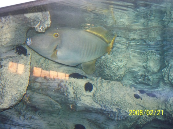 2008221拍攝於澎湖水族館_004.jpg