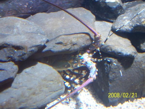 2008221拍攝於澎湖水族館_006.jpg