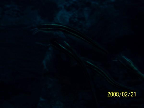 2008221拍攝於澎湖水族館_007.jpg