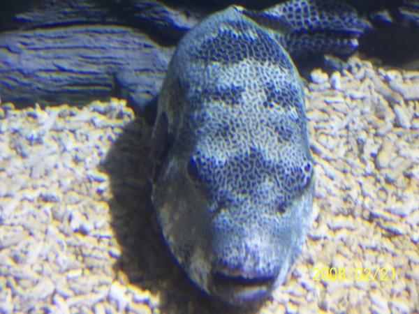 2008221拍攝於澎湖水族館_005.jpg