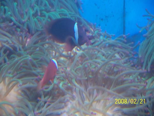 2008221拍攝於澎湖水族館_008.jpg