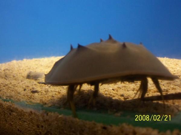 2008221拍攝於澎湖水族館_011.jpg