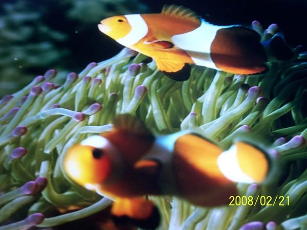 2008221翻拍於澎湖水族館牆上的照片_003.jpg