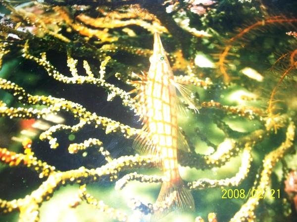 2008221翻拍於澎湖水族館牆上的照片_001.jpg
