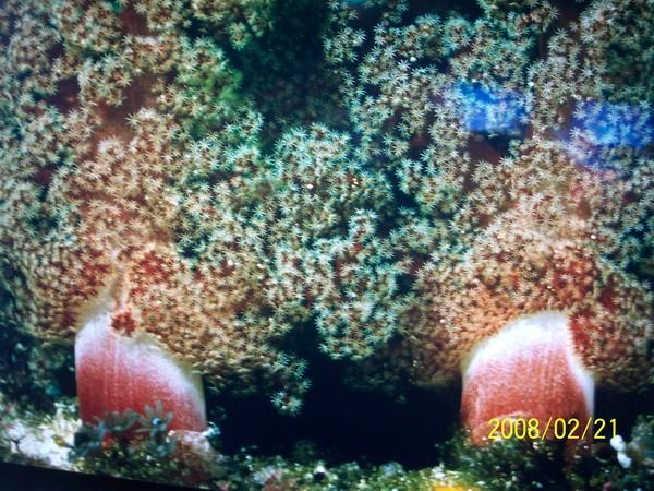 2008221翻拍於澎湖水族館牆上的照片_004.jpg