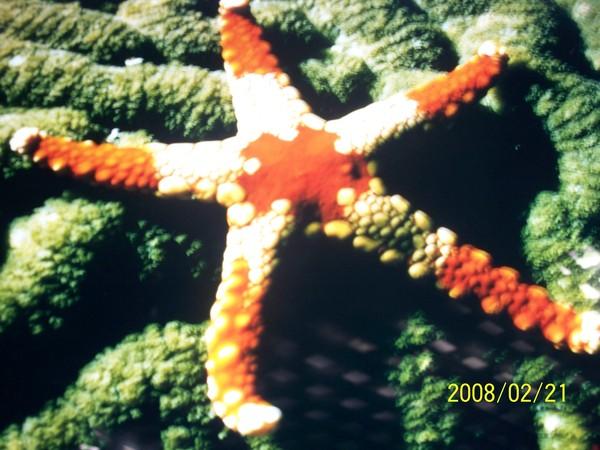 2008221翻拍於澎湖水族館牆上的照片_007.jpg