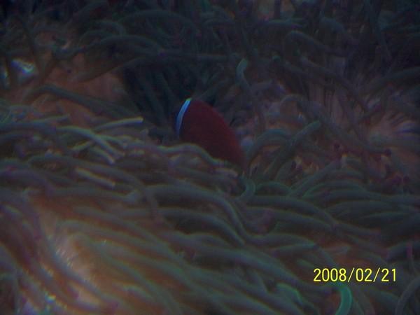2008221拍攝於澎湖水族館_012.jpg