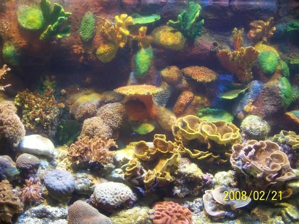 2008221拍攝於澎湖水族館_015.jpg