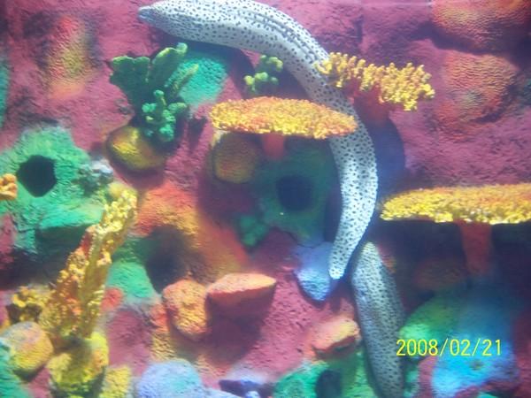 2008221拍攝於澎湖水族館_016.jpg