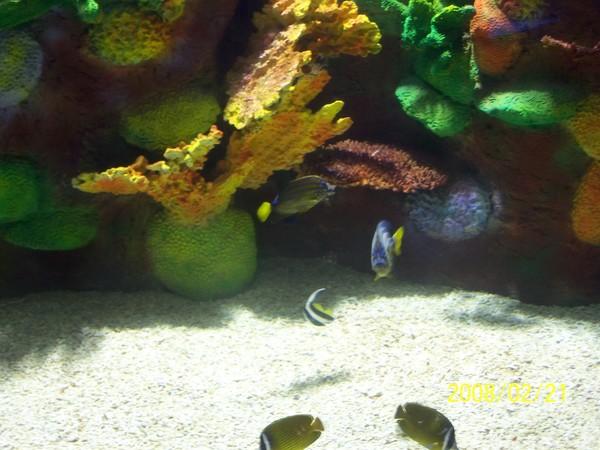 2008221拍攝於澎湖水族館_020.jpg