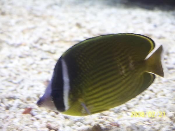 2008221拍攝於澎湖水族館_019.jpg