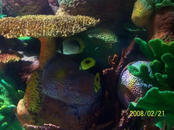 2008221拍攝於澎湖水族館_021.jpg