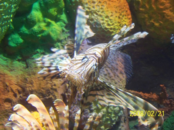 2008221拍攝於澎湖水族館_022.jpg