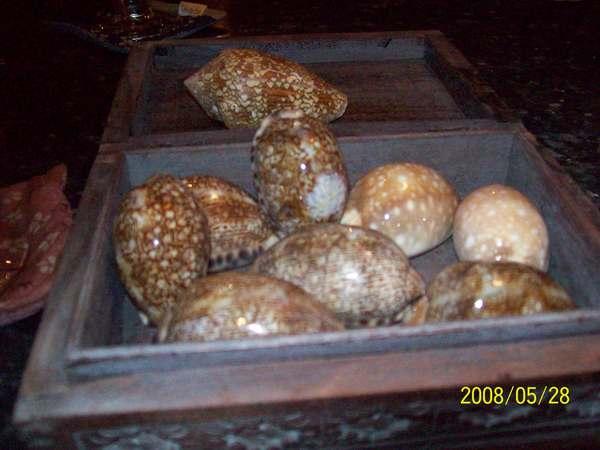 20080528蒙地卡羅老闆娘借我拍攝的貝殼.jpg