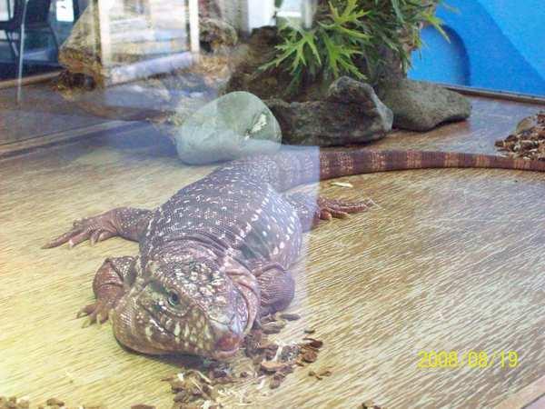 20080819拍攝於台東海洋生物展覽館04.jpg