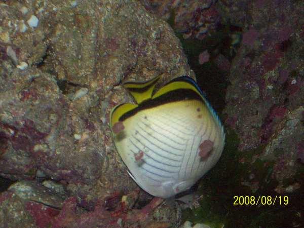 20080819拍攝於台東海洋生物展覽館09.jpg