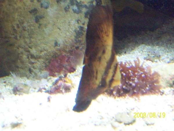 20080819拍攝於台東海洋生物展覽館011.jpg