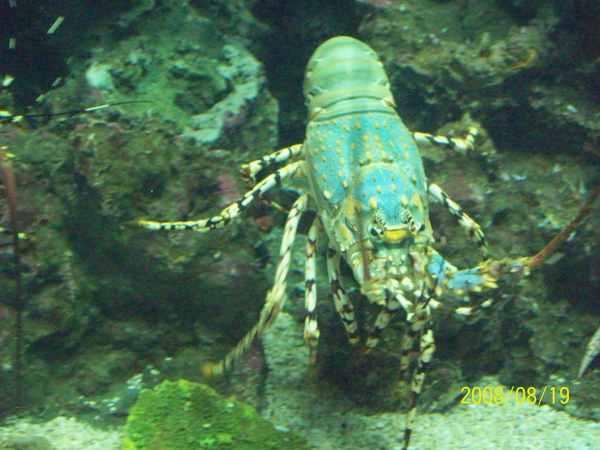20080819拍攝於台東海洋生物展覽館012.jpg