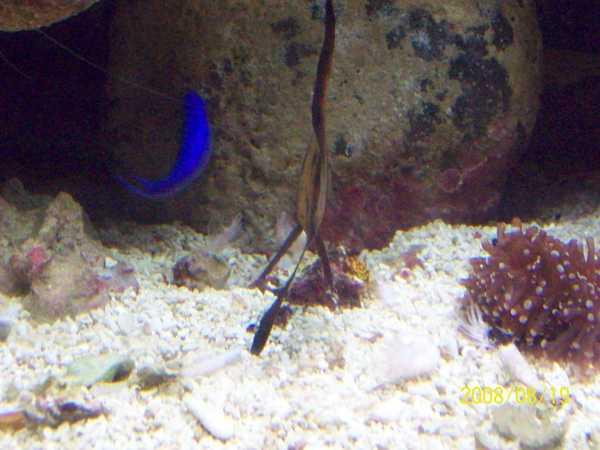 20080819拍攝於台東海洋生物展覽館014.jpg