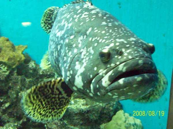 20080819拍攝於台東海洋生物展覽館016.jpg