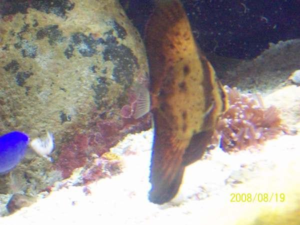 20080819拍攝於台東海洋生物展覽館015.jpg