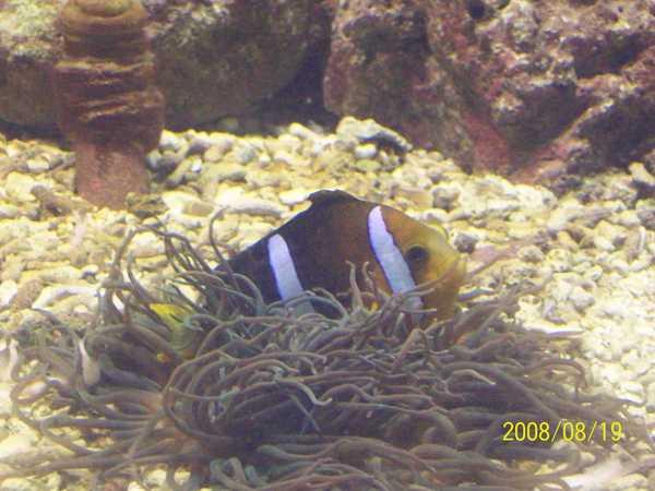 20080819拍攝於台東海洋生物展覽館018.jpg