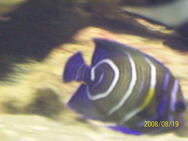 20080819拍攝於台東海洋生物展覽館020.jpg