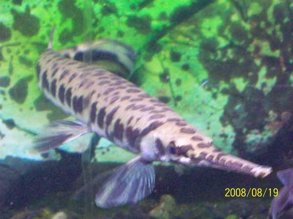 20080819拍攝於台東海洋生物展覽館022.jpg
