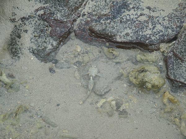 20110628拍攝於後寮沙灘036.JPG