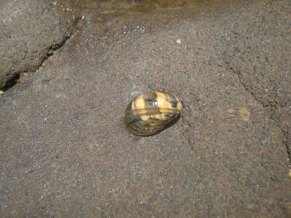 20110701拍攝於龍門後灣沙灘028.JPG