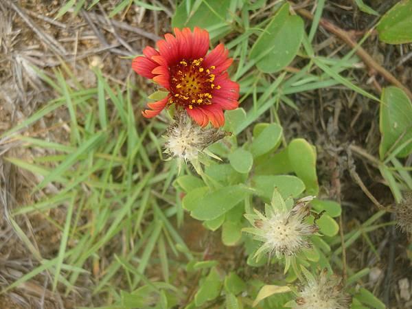 20110629拍攝於竹灣紫菜礁015.JPG