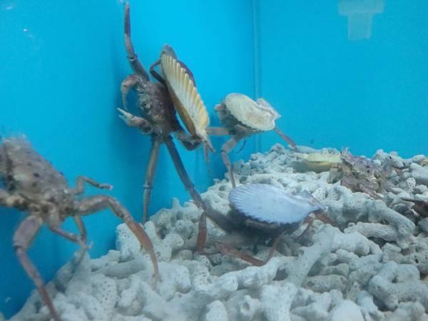 20110630拍攝於螃蟹博物館003.JPG