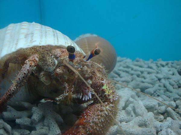 20110630拍攝於螃蟹博物館001.JPG